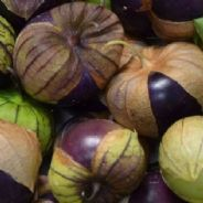 Tomatillo Purple - 100 seeds Physalis ixocarpa